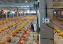 XL Smart Poultry; Solusi Berbasis IoT Tingkatkan Produksi Unggas